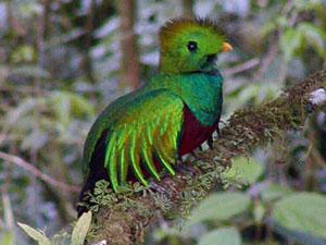 Monteverde Adventure Company
