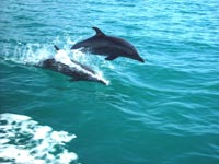 Dolphin Viewing