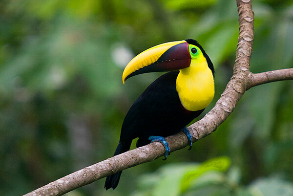 Bird Watching in Arenal