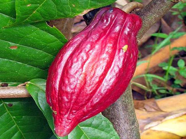 Rainforest Chocolate Tour Arenal