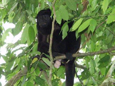 Monkey Spotted on Safari Float