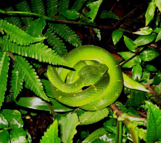 Snake Monteverde Costa Rica