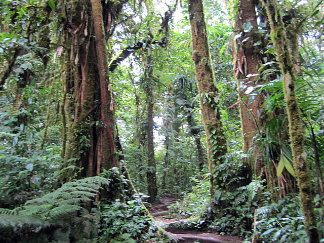 Cloud Forests of Monteverde