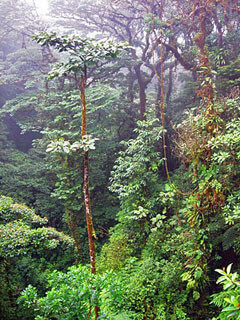 Thirsty Trees Monteverde Costa Rica