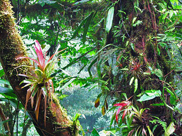 The Monteverde Cloud Forest