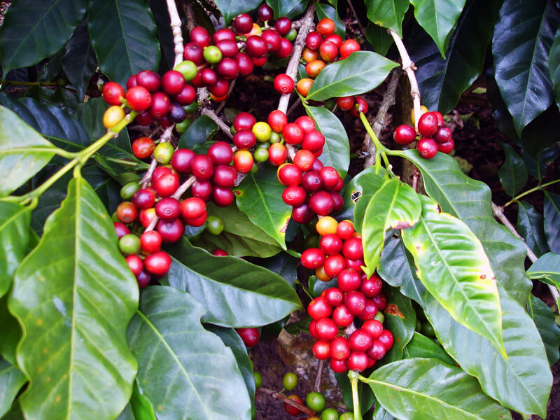 Doka Coffee