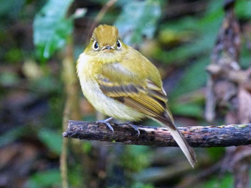 Bird Watching Monteverde