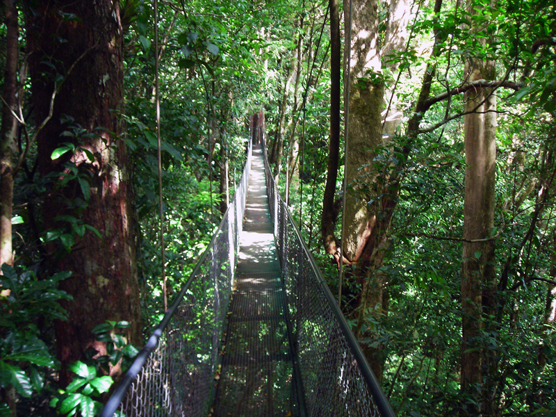 Adventura Canopy Suspension Bridges Monteverde