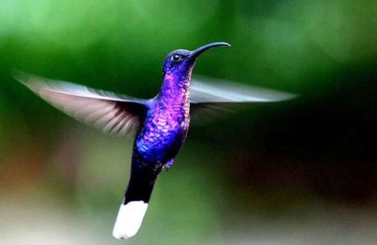 Selvatura Park Hummingbird Garden