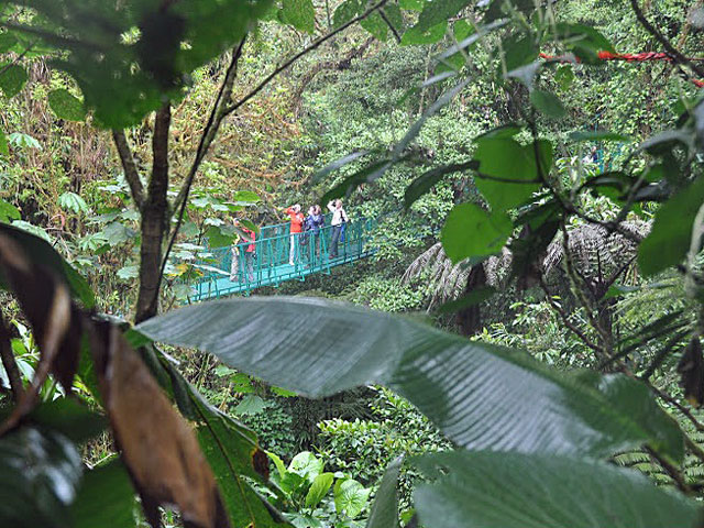 Cloud Forest (Selvatura Canopy)