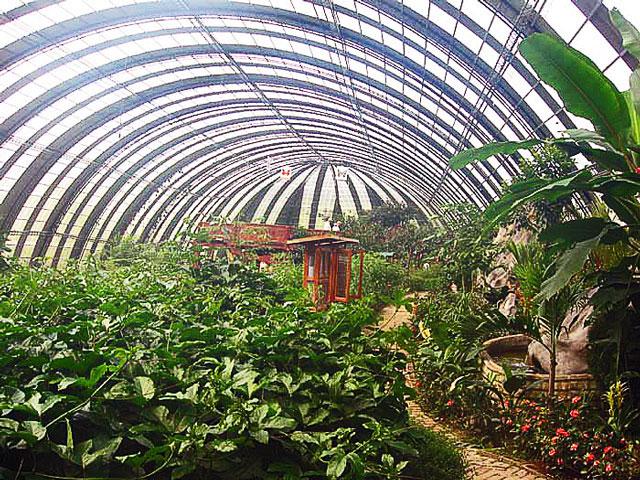 Selvatura Butterfly Garden