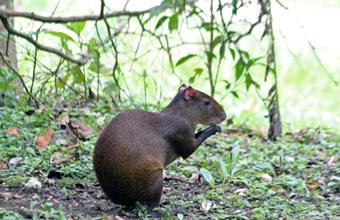 Monteverde Wild Life