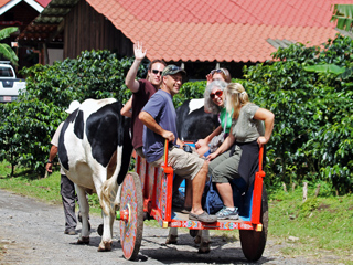 Ox Cart Don Juan Coffee Tour Monteverde