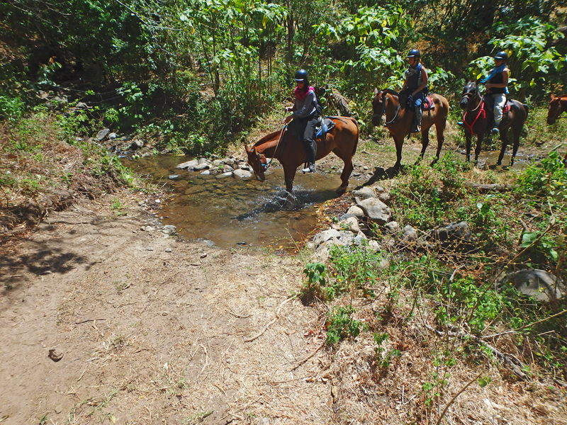 Crossing Streams Monteverde Horseback Costa Rica