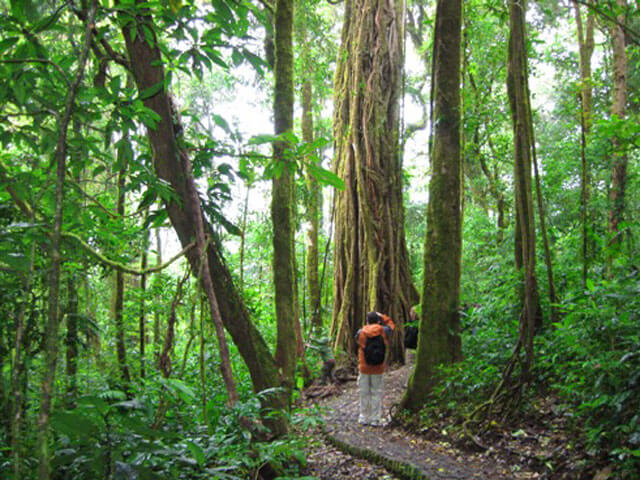 cloud forest monteverde costa rica tour package
